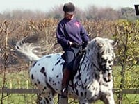 Intermediate Private Riding Lesson - 1 hour