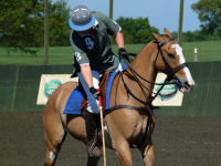 Introductory Private Polo Lesson for TWO