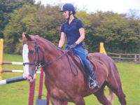 Showjumping  Group lesson  (Weekend)