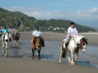 Estuary and Beach ride for beginners riders x 2