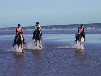2 hour Beach Ride for all abilities, 4 people