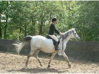 Private Dressage Practice