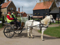 Private Carriage Driving Experience for 2