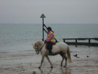 1 Hour Beach Ride - Isle of Wight - Adult
