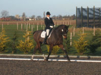 First Dressage lesson for experienced riders
