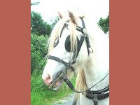 Carriage Driving Experience