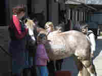Adult Own A Pony Morning or Afternoon