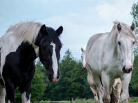 Experience from Horseriding4all
